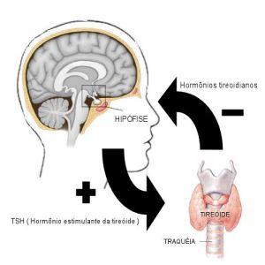 Hipotireoidismo - Funcionamento da tireóide