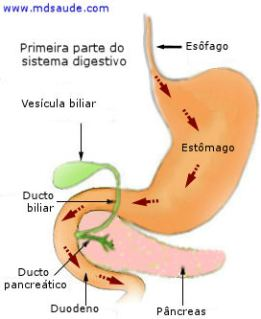 Primeira parte do sistema digestivo