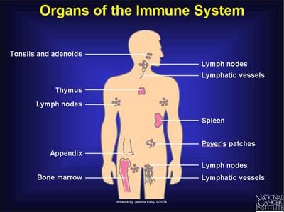 immune-system-101 (1)