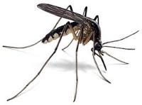 a28de-mosquito